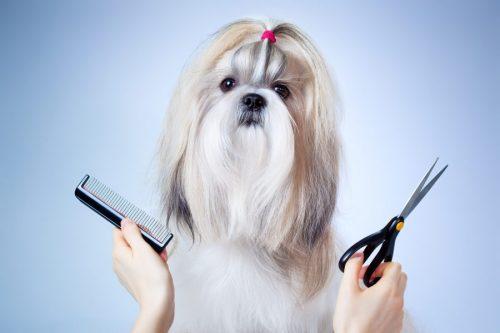 Curso gratis de PELUQUERÍA canina